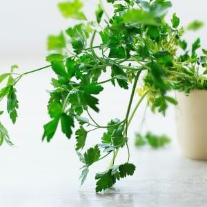 Grow Your Own Kitchen Garden