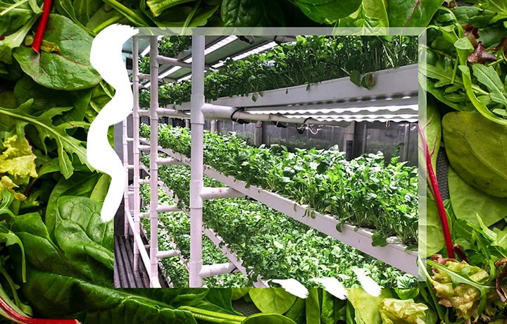 This Is Why Hydroponics Are Good For You