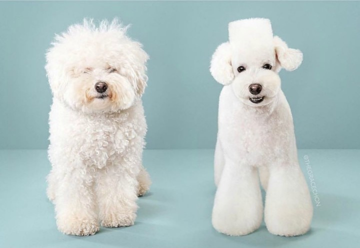 7 Grooming Styles For Your Dog's New Look