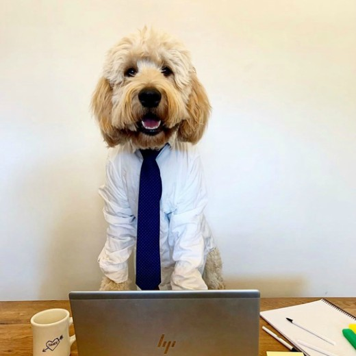 """Pet Of The Week:  These Dogs Who Are """"Working"""" From Home Are Just Like Us"""