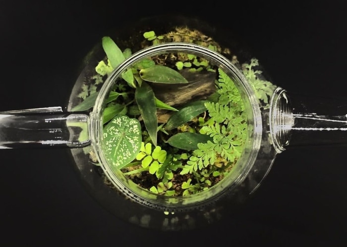 Silong's terrariums and other creations