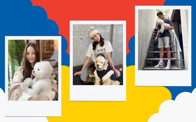 Stylish Korean Celebrity Pets