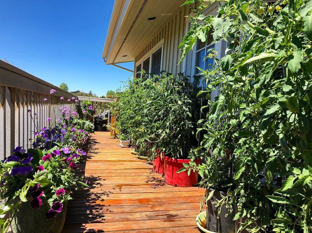 Grow Your Kitchen Garden