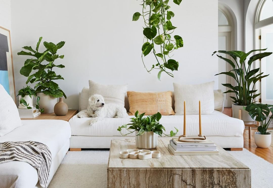 10 Instagram Feeds To Follow For Plant Guidance