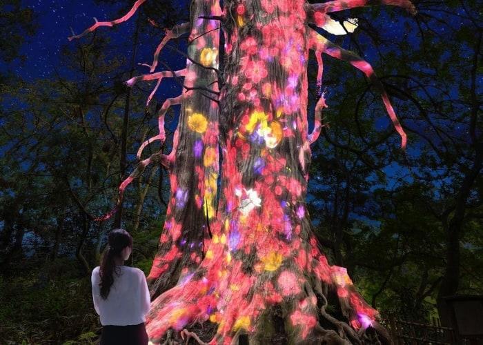teamlab transforms Kairakuen Garden